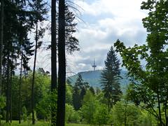 2018 Germany // Thüringen-Hessen-Rhein-Wanderweg // Blick zum Dünsberg (maerzbecher-Deutschland zu Fuss) Tags: 2018 thüringenhessenrheinwanderweg wanderweg wandern natur deutschland germany trail wanderwege maerzbecher deutschlandzufuss hiking trekking weitwanderweg fernwanderweg deutschlandzufus r hessen westerwald ww dünsberg