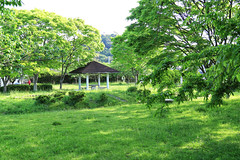 freshly green.. (Arlenk.) Tags: greenleaves trees springtime province ibaraki sundaymorning familyday canoneos7d arlenekato arlenk park
