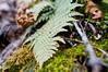 Signs of Spring (fotofish64) Tags: springtime spring season flora fern pattern outdoor color green foliage depthoffield shallowdepthoffield pentax pentaxart kp kmount smcpentaxfa35mmf2 plant texture primelens 35mm
