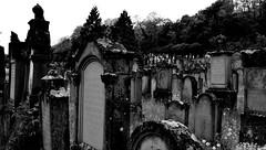 Cimetière Israélite  -  Cemetery Israelite (Philippe Haumesser Photographies (+ 6000 000 view)) Tags: cimetière cemetery cimetières cemeteries tombes tombs pierrestombales graveyards noiretblanc blackandwhite monochrome nikond7000 nikon d7000 reflex 2018 169