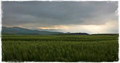 Campo de trigo (Gurutx) Tags: verde campo nafarroa navarra europe euskadi astrain cielo sky