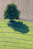 Two In One (Aerial Photography) Tags: by ebe obb 06052011 1ds63436 baiern baum bavaria bayern braun bäume deutschland einzelbaum farbe fotoklausleidorfwwwleidorfde fotoklausleidorfwwwleidorfaerialcom germany grün heu hochformat jakobsbaiern kulturlandschaft land landscapeandnature landschaft landschaftnatur landwirtschaft laubbaum luftaufnahme luftbild naturdenkmal region vgglonn zweibäume aerial agriculture benchmark brown color colour cultivatedlandscape cultural deciduoustree foliagetree green hay landscape landscapenature leaftree monument naturallandmark nature outdoor singletree tree trees twotrees verde baiernlkrebersberg bayernbavaria deutschlandgermany deu