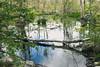 Reflect (lclower19) Tags: westroxbury massachusetts tree fallen reflection water sky millenniumpark odc