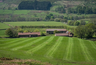 Stables Stripes