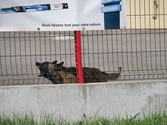 Même plus (moniquefouchereau) Tags: chien garde garage gag