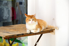 Lovely cat in Anacapri (moniq84) Tags: lovely cat cute anacapri capri red white eyes day shops italia animal italy animals street travel world