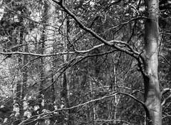 Tree (Moor Road) (Jonathan Carr) Tags: landscape rural northeast monochrome blackandwhite mediumformat mamiya tmax400