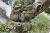 OWIphoto-6301 (OWIP) Tags: cumbayá face quito tree funny mybackyard pareidolia park