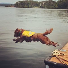 Dazzle's Eddy loves the water too!