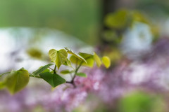 Dream Forest 2 (Howard L.) Tags: abstract canonef135mmf2lusm ilce7m3 leaves oaklandlake redbud sonya7iii forest dream tree branches nature chaotic beautifulmess