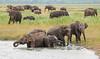 Sri Lanka '17_1201 (Jimmy Vangenechten 76) Tags: geo:lat=812415000 geo:lon=8092643900 geotagged srilanka ceylon asia azië indianocean indische oceaanwildlifeanimaldierkaudulla national parkkaudullawewa asian asiatic elephant aziatischeolifant elephasmaximus