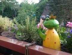 2018-05-13 suchender Froschkönig / searching frog prince (kaianderkiste) Tags: hamburg bg12 balkon balcony froschkönig frogprince fernglas suchen binoculars blumen pflanzen plants flowers