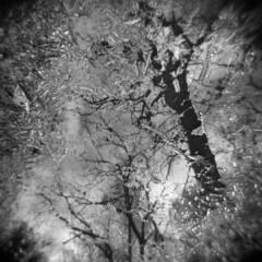 From the Ground Up #4 (LowerDarnley) Tags: holga woods spring winterasspring trees branches mud wet reflection middlesexfellsreservation morningwalk