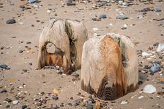 Erosion (Bogtramp) Tags: wood kpkphotography shingle nikon east water rocks beach d500 yorkshire kitching worn coastal chalk sky sand flamborough coast uk sea