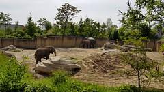 20180523_111751 (TheSlayerNL) Tags: wildlands emmen zoo dieren animals adventure wildlandsadventurezoo