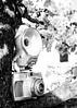 More Cameraflage II (jah32) Tags: camera cameras vintagecameras vintage flash bella bella44 trees tree miniaturejapanesepeartree frame framing monochromatic monochrome blackandwhite blackwhite cmwdblackandwhite highkey