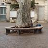 banc-arbre (jean-louis zimmermann) Tags: avignon banc
