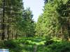 IMG_3999 (superingo78) Tags: eifel hohes venn wiesen moor grün natur monschau birken holzsteg nadelwald laubwald
