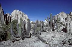 SA79_0528 (Peter Hessel) Tags: 1a valledelaluna bol bolivia lapaz