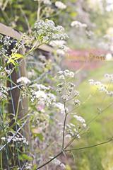 Spring flowers (3) ({rebecca.evans}) Tags: spring flowers flower nature natureycrap bokeh pastel soft florabella 50mm