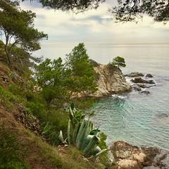 Costa Brava - Espagne (Jean Paul Renais) Tags: espagne costabrava mer cactus pin