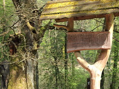 2 (silvy-s) Tags: nature borytucholskie trees m43 epl1 forest