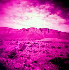 Furnace Creek Wash (Redscale) (EmperorNorton47) Tags: deathvalleynationalpark california photo analog spring squareformat film landscape holga redscale wash canyon desert nationalpark nps monochrome unesco worldheritagesite
