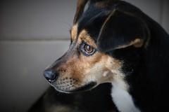 Daisy (Liliane Loose) Tags: dog cachorro perro hund chien pooch