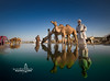 camel fair, rajasthan (Albert Photo) Tags: camel fair rajasthan india asia nomadic sky animal water reflection silhouette people rest drinking