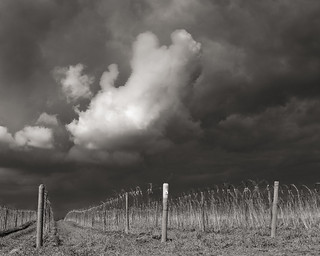 vines and cloud