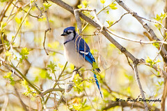 IMG_6052 (nitinpatel2) Tags: bird nature nitinpatel