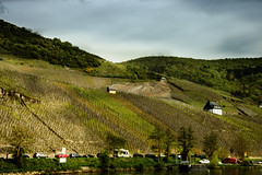 where the Mosel wine grows (aksielza) Tags: vineyard river spa town germany bernkastelkues