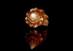 Low key spiral... (FaRzAnA's PHoToGraPHy) Tags: macromondays lowkey