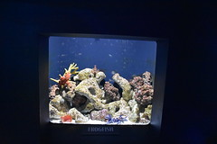 Frogfish (Adventurer Dustin Holmes) Tags: 2018 wondersofwildlife frogfish aquarium saltwater exhibit animal animals chordata animalia corral
