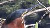 Green Heron (robert (Bobby)powell) Tags: wildlife birds robertbobbypowell nature everglades greenheron rpowell imagesofflorida naturephotography naturephotographer aolimageofflorida yahooimagesofflorida wildlifephotography wildlifephotographer imagesofbirds eos77d wildlifeimages profileshot bird