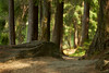 Rotkäppchens Weg zur Großmutter (Ernst_P.) Tags: aut oetz österreich piburgersee tirol samyang walimex 135mm f20 wald forest bosque baum fichte tree arbol weg pfad path camino sendero ötz ötztal