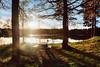 Sørsvann (Øyvind Bjerkholt (Thanks for 54 million+ views)) Tags: sørsvann lake water bench trees sunset reflections nature landscape arendal norway canon outdoors goldenhour scenery lensflare