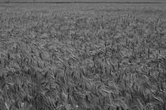 Confusion (bamboosage) Tags: kmz industar61 50mm f28 lz preset m42 russia