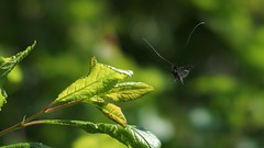 Amazing antennae