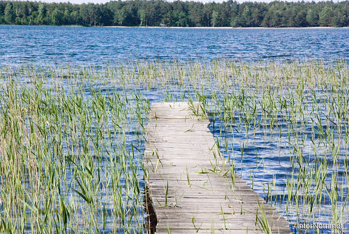 Шацький Національний Природний Парк Озеро Пісочне  МІстки InterNetri  Ukraine 133