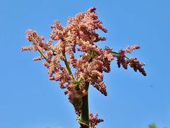 flowering (Hugo von Schreck) Tags: hugovonschreck flower blume blüte ngc canoneos5dsr tamron28300mmf3563divcpzda010