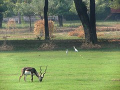 Agra 96 - Akbars tomb, park (juggadery) Tags: 2015 india uttarpradesh animal