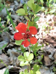 Little red flower (Fée-Tich) Tags: fleur flower red rouge nature lumière light