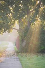 Mist_080926_014 (johnshurtz) Tags: 2008 mist morning scenic aurora illinois unitedstates usa