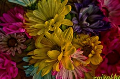 A bouquet of flowers for you... (zairakhan) Tags: bouquet flowers flora beautiful loveforflowers