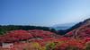 DSC_8646-Edit (SDX_yyy) Tags: ツツジ つつじ azalea flower 花 奈良 nara japan beautiful plateau 高原