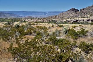 Across the Big Bend Landscape to the Santa Elena Canyon