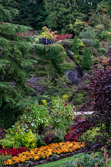 The Butchart Gardens, British Columbia, Canada (takasphoto.com) Tags: apsc america brentwoodbay britishcolumbia butchartgardens canada color fallenleaves floraldisplaygarden flower flowers foliage fuji fujixt1 fujixt1fujifilm fujifilm fujinon fujinonlensxf18135mmf3556rlmoiswr fujinonxf18135mmf3556rlmoiswr green greenplants hoja japanesegarden jenniebutchart kingdomplantae leaf leaves lens lifestyle mirrorless mirrorlesscamera nature northamerica outdoor plantae robertpimbutchart thebutchartgardens theitaliangarden therossfountain tree trees vancouverisland verde victoria xmount xt1 xtranscmosii xtransii xf18135 ã¿ã©ã ã«ãã ãã¸ãã³ ãã¸ãã£ã«ã ãããã£ã¼ãã»ã¬ã¼ãã³ ãã©ã¼ã¬ã¹ ã©ã¤ãã¹ã¿ã¤ã« åç±³ åºå æ¤ç© æ¤ç©å ç´è ç· ç·è² ç¿ èªç¶ è½è è