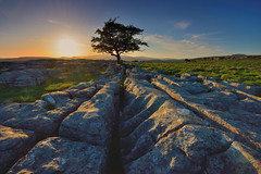 Sunset shadows (images@twiston) Tags: sunset shadows lastlight thewinskilltree alone hawthorn tree thelimestonetree winskillstones winskill stones scar dales national park solitarytree lone solitary limestone pavement grikes clints sky northyorkshire yorkshire limestonepavement lonetree bleak stark fell rock rocks gnarled gnarly 3peaks yorkshire3peaks whernside ingleborough penyghent landscape yorkshiredalesnationalpark fields grass moors moorland moor langcliffe imagestwiston classicdales spring godsowncountry ribblesdale wideangle wide angle dusk goldenlight goldenhour ultra ultrawide