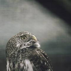20180429-152549 - Bird Bokeh (torstenbehrens) Tags: bird bokeh schleswigholstein deutschland m42f8500mm zhongyi objektiv turbo ii efm43 wecellent m42ef adapter